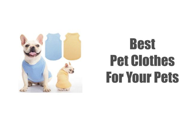 Best Pet Clothes For Your Pets