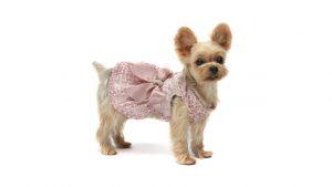 blank dog shirts dresses for dog hot dog shirts dog graduation cap dog sweaters walmart
