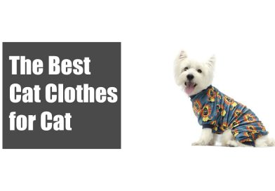 The Best Cat Clothes for Cat 2020