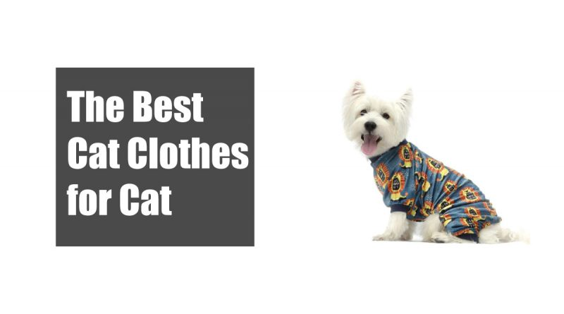 The Best Cat Clothes for Cat 1