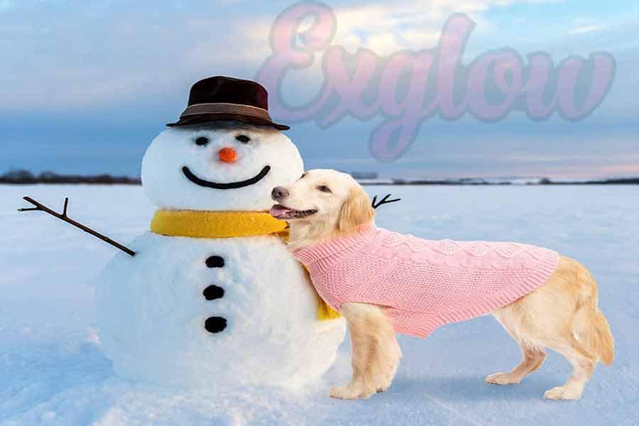 Pink Winter Coat for Dog