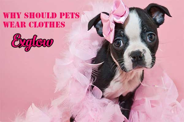 why should pets wear clothes