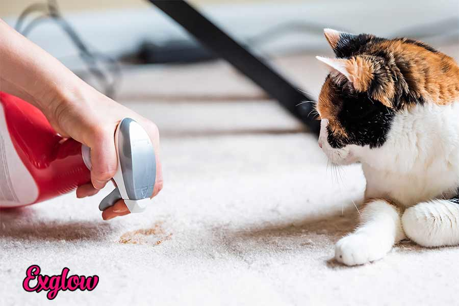 How to Get Cat Pee Smell Out of Clothes