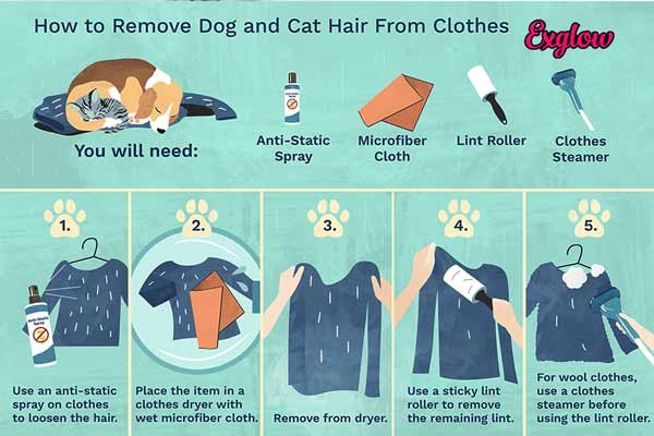 how to get dog hair out of clothes without lint roller,