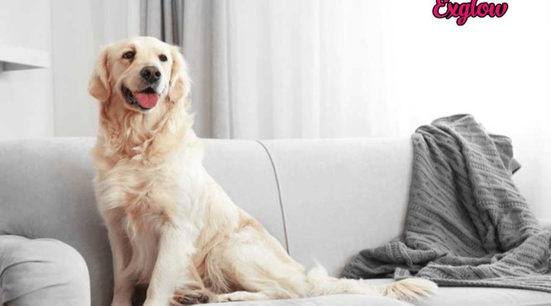 How to get dog hair out of clothes